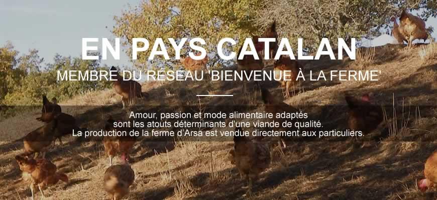 En pays Catalan, membre du réseau Bienvenue à la Ferme. Amour, passion et mode alimentaire adapté sont les atouts déterminants d'une viande de qualité. La production de la Ferme d'Arsa est vendue directement aux particuliers.